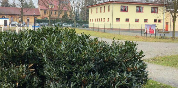 Ansetzung vom 24.02.2018 – Das Heimspiel gegen den 1.SV Lok Calau wurde abgesagt!